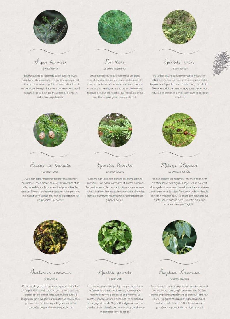 Portfolio - Secrets des bois - Essences